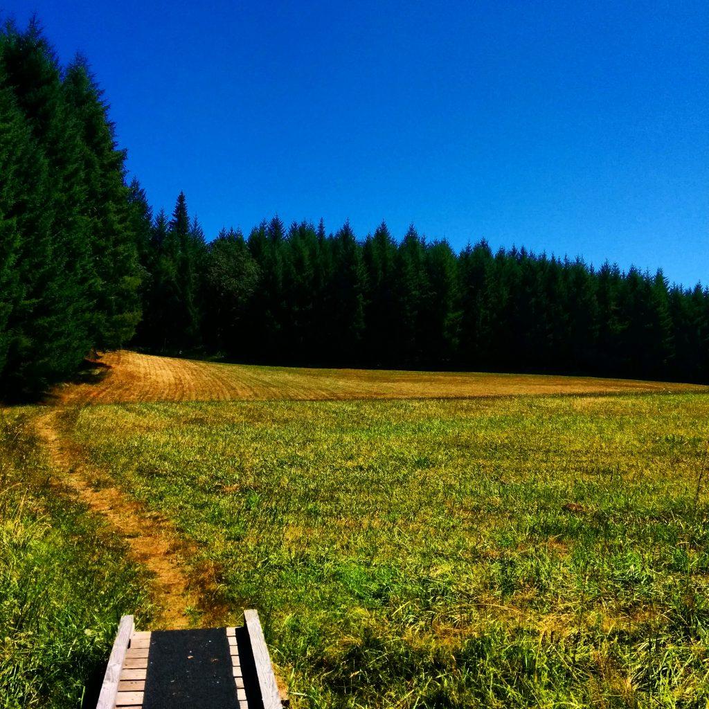 Miller Woods Conservation Area