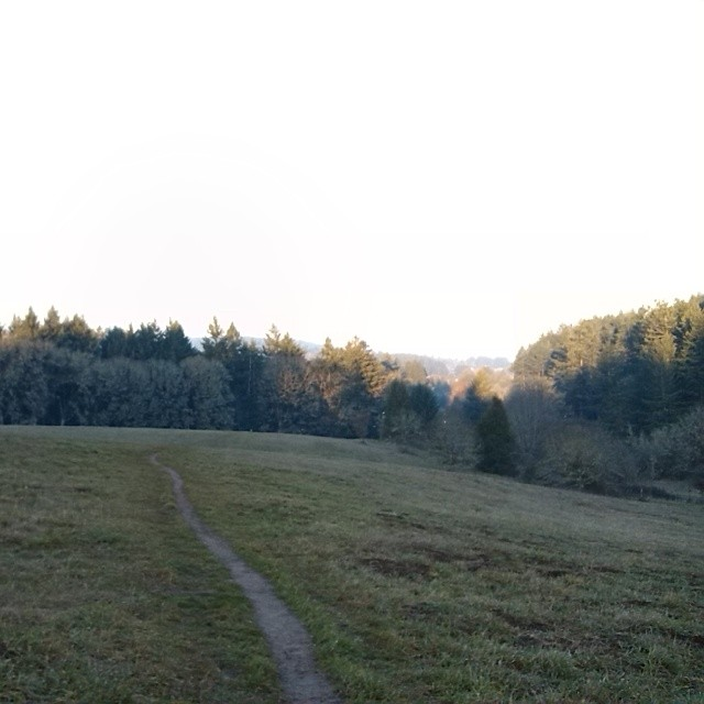 Woodland Meadow Park