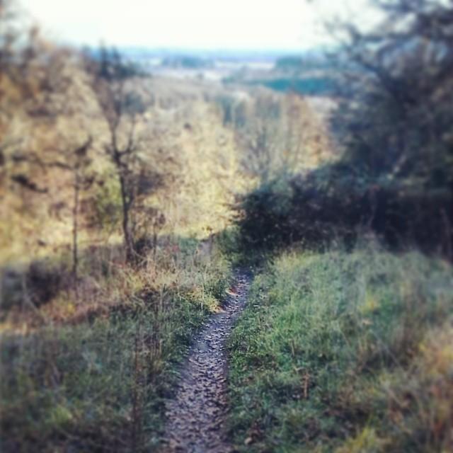 Bald Hill Natural Area
