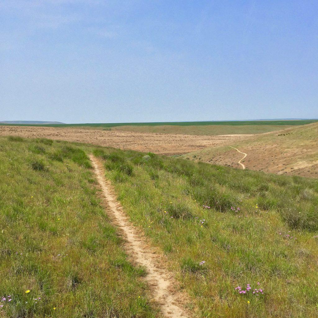 Echo trails