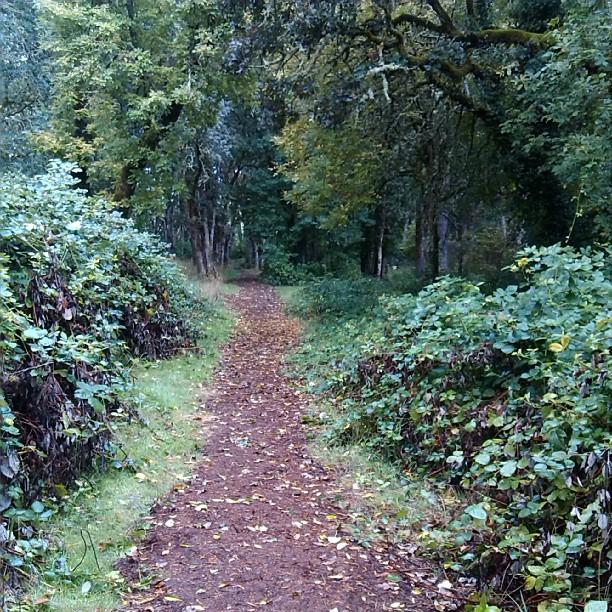 Woodmansee Park